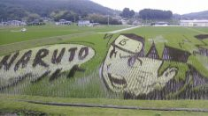 Rice Paddy Arts in Japan
