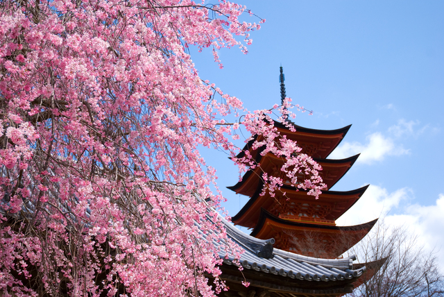 From neighborhood parks to World Heritage Sites! 12 Recommended Hanami Spots around Hiroshima (2017)