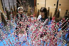 飛騨の新年彩る花もち作り(岐阜新聞Web) – Yahoo!ニュース